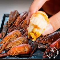 澳洲淡水小龍蝦(1Kg±10%)【水產優】