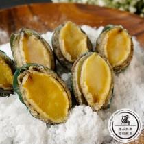 極品熟凍帶殼鮑魚 (250g±5g/6顆)份【水產優】